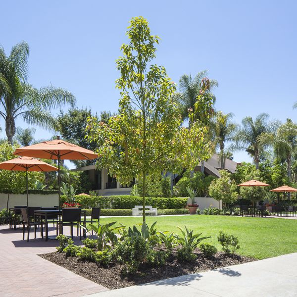 Exterior view of courtyard at Park West Apartment Homes in Irvine, CA.