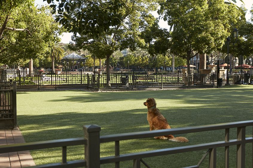 Exterior view of Dog Park at The Park at Irvine Spectrum Apartment Homes in Irvine, CA.