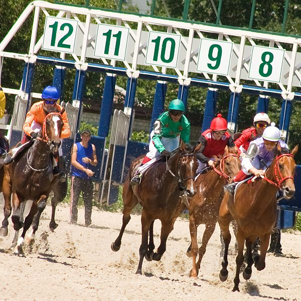 Start Horse Racing of the prize Derby in Pyatigorsk.