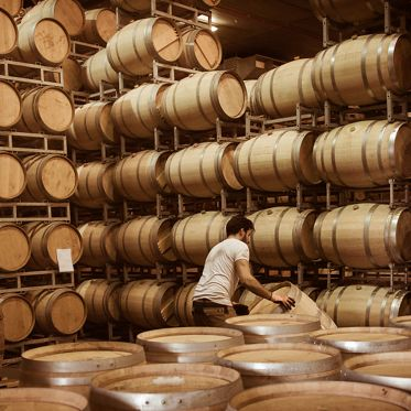 Winemaker barrels moving up or down by rolling on the ground in a large storage cellar, Bordeaux Vineyard, France