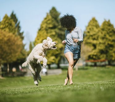 A happy young adult woman enjoys time at a park with her standard poodle, running, playing, and relaxing with the dog.